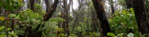 Kilohana-forest-header
