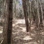 Bond Forest