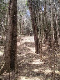 `Iole's Bond Forest and Upland Loop Trails-July 19, 2014